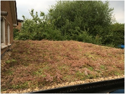 Green Roof Extension